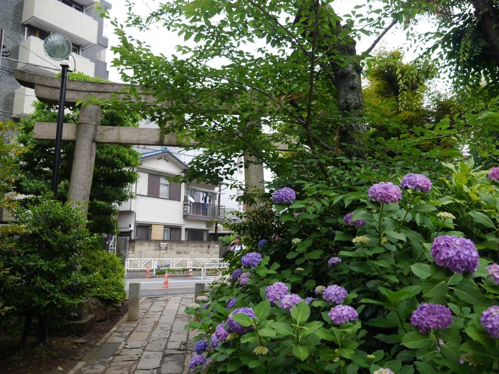 境内は紫陽花や菖蒲も見頃でした。